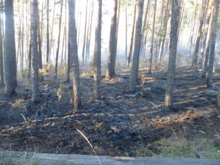 Как сообщили агентству «Урал-пресс-информ» в главном управлении лесами области, возгорание произо