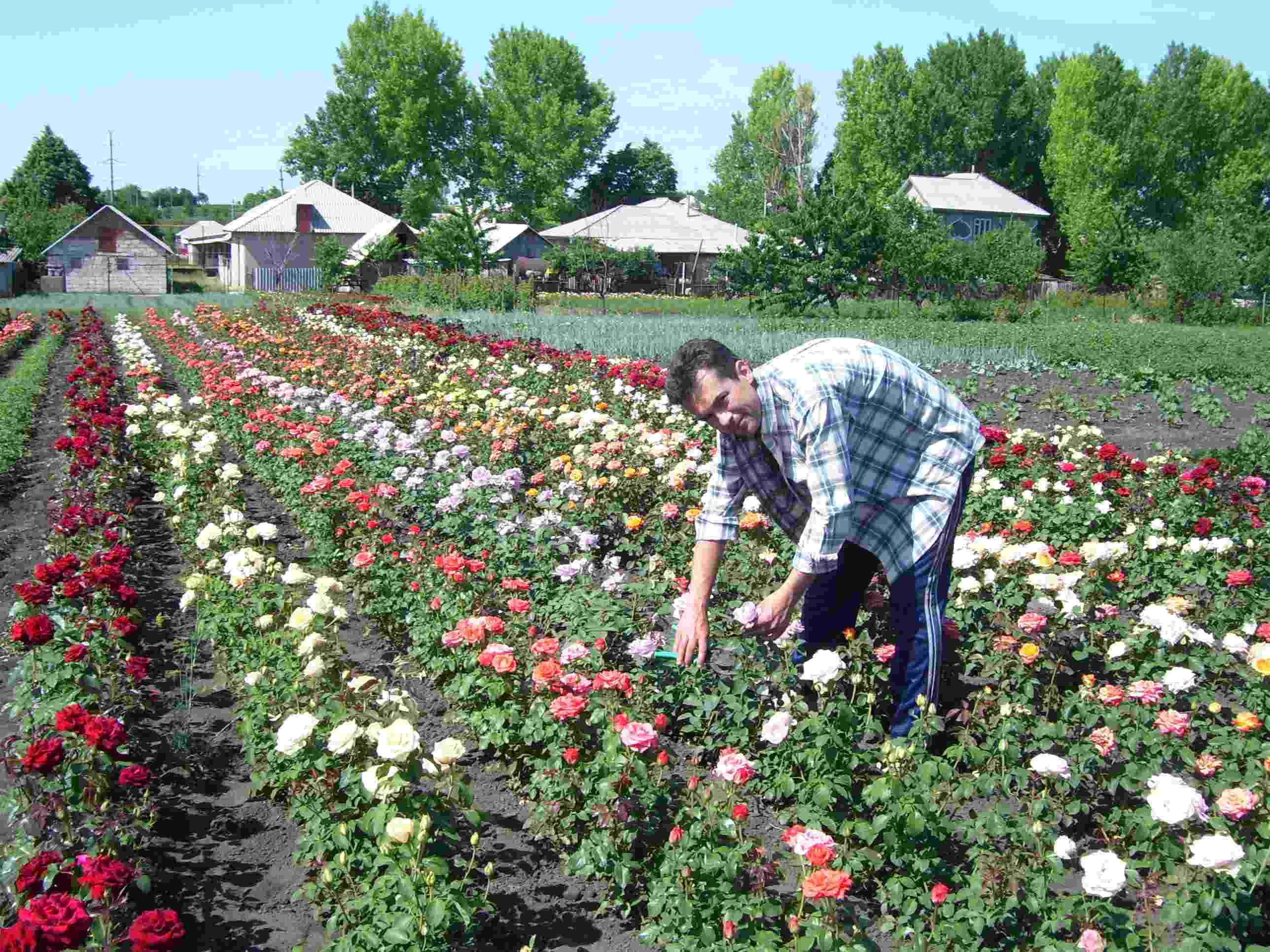 По словам исполняющей обязанности начальника отдела надзора за безопасным обращением с пестицидам