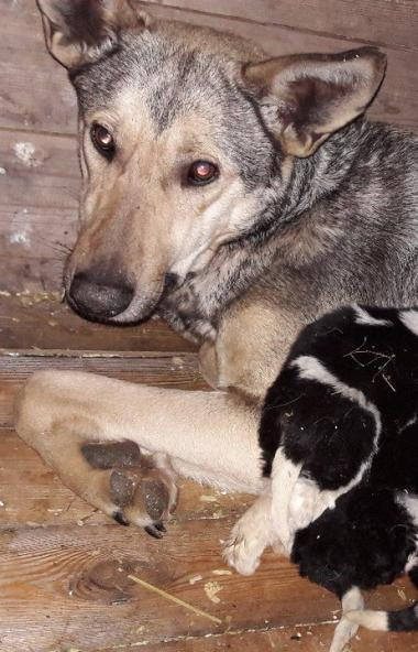 Депутаты челябинской городской думы проверяют состояние приютов для безнадзорных животных.