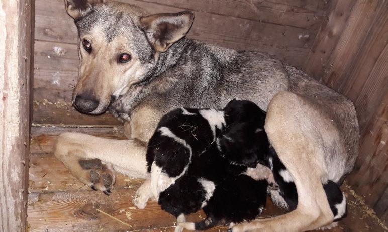 Государственный приют для бездомных животных, первый в Челябинской области, начал принимать «пост