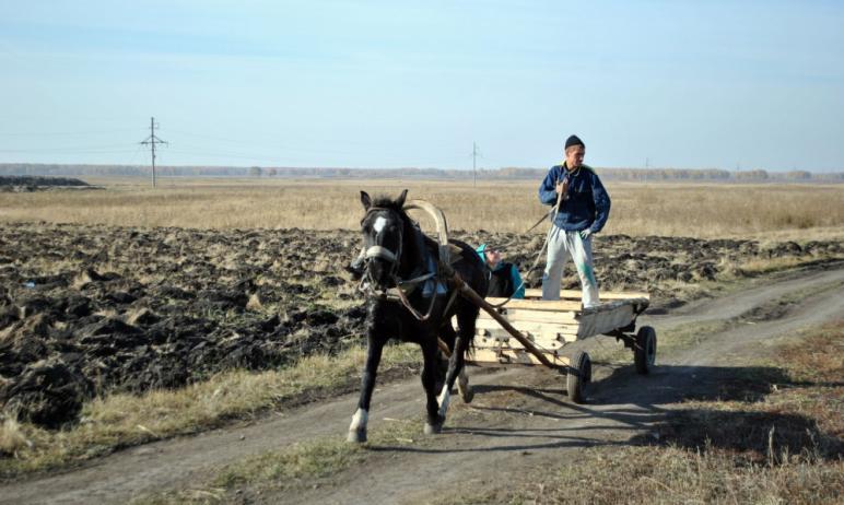 Пять семейных фермерских хозяйств Челябинской области получат гранты в виде стимулирующих субсиди