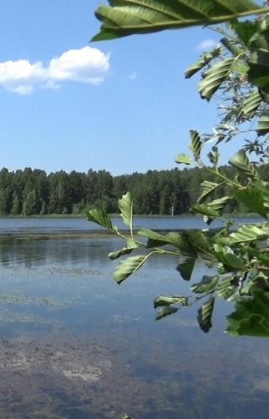 По поручению губернатора Челябинской области Алексея Текслера на озере Аракуль, расположенном вбл