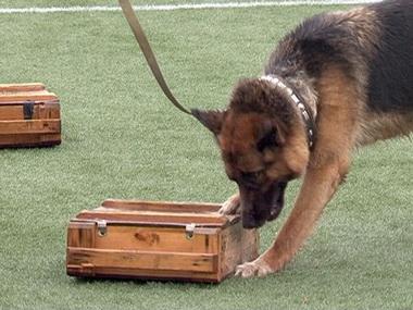 Как сообщает пресс-служба наркоконтроля, на соревнованиях по собаководству будут определены самые