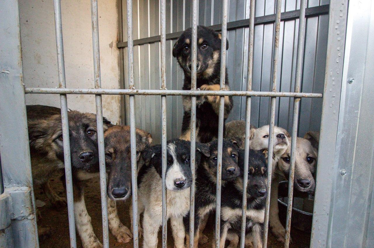 В Челябинске одна из бригад службы отлова привозит в ветприемник ГорЭкоЦентра животных от горожан