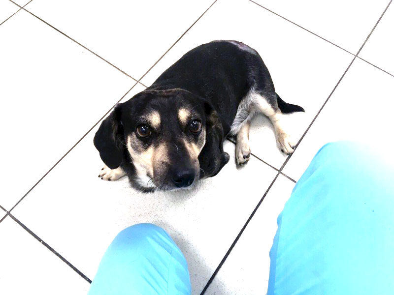 В Миассе израненная собака приползла к людям за помощью. Прохожие шли мимо, никто не хотел помочь