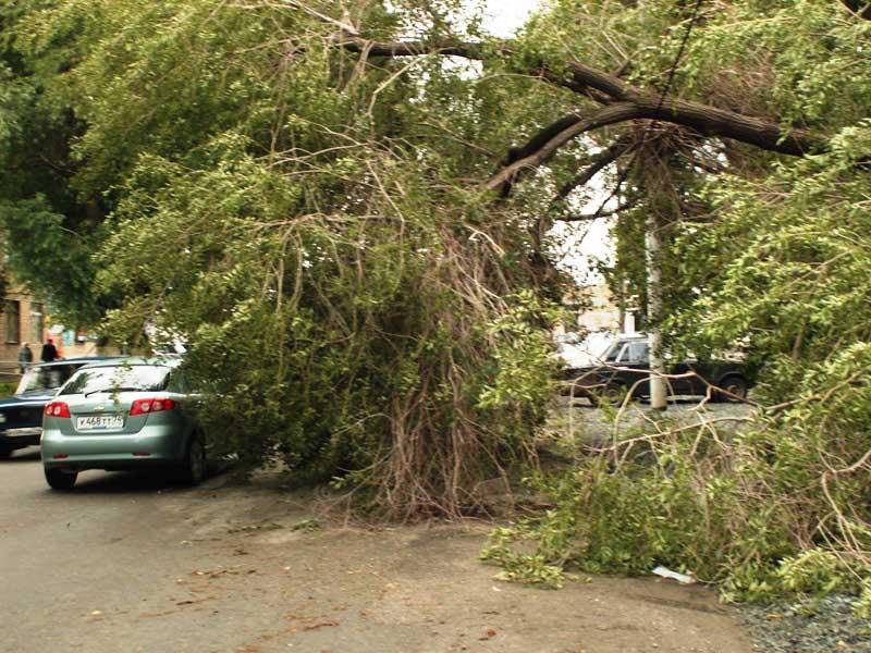 За деревья, которые находятся на улицах, отвечает городская администрация. Ветки, упавшие во врем