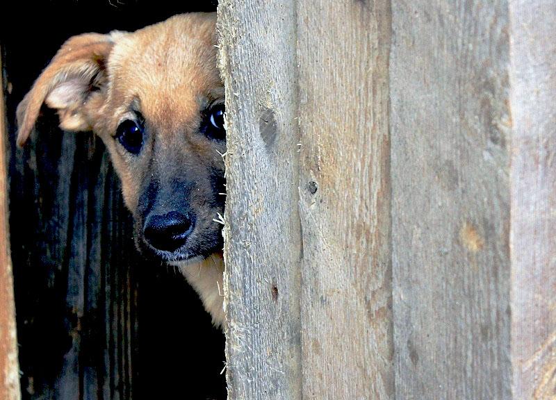 В Челябинске определен новый исполнитель муниципального контракта на отлов безнадзорных животных