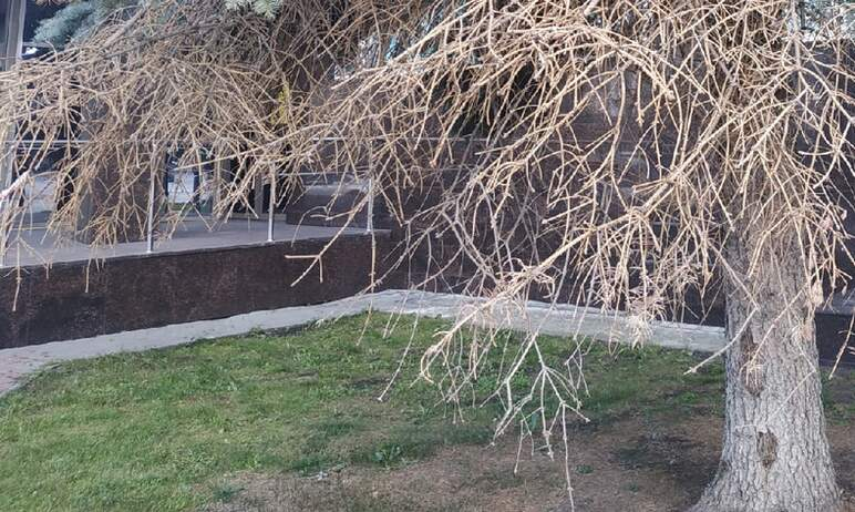 В Челябинске на 12 адресах снесут 17 сухостойных деревьев. Об этом сообщили в комитете дорожного