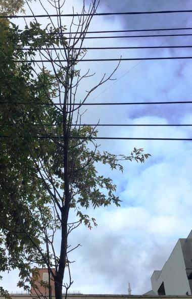 На улице Советской в Центральном районе Челябинска озеленители «вплели» молодые деревья в провода