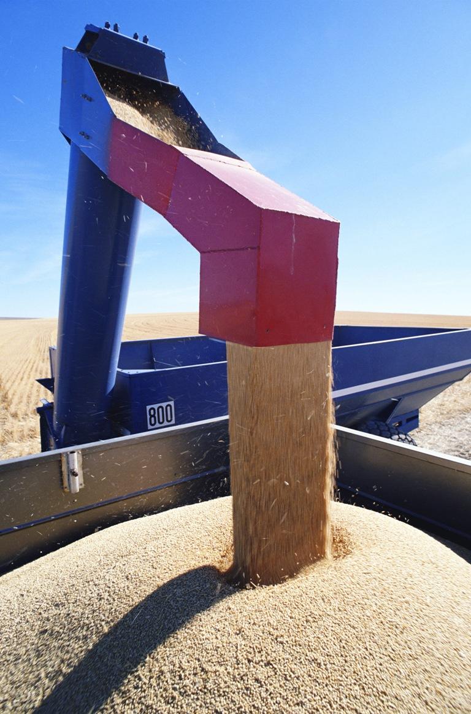 Если на первых торгах 29 ноября сельхозтоваропроизводители Челябинской области реализовали госуда