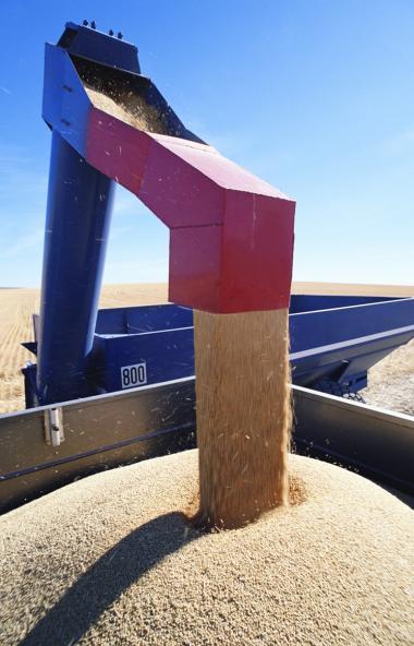 Обеспечить перерабатывающие предприятия Челябинской области продовольственным зерном — одна из гл