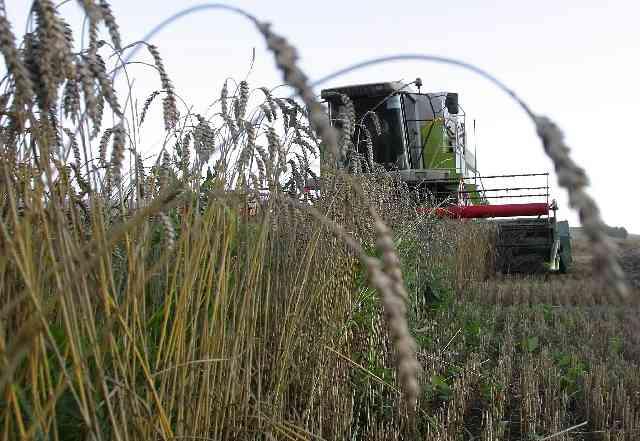 Еще до начала уборки зерна крестьянам удалось заготовить основной объём сена и сенажа. Хозяйства