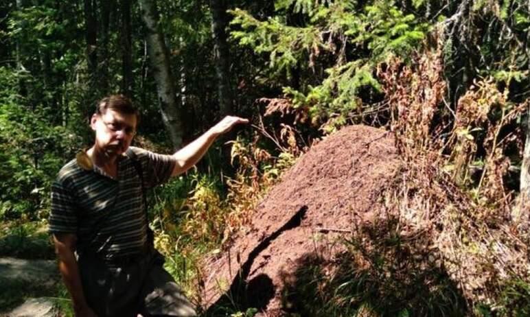 В национальном парке «Таганай» (Челябинская область) ученые из Екатеринбурга изучили состояние по