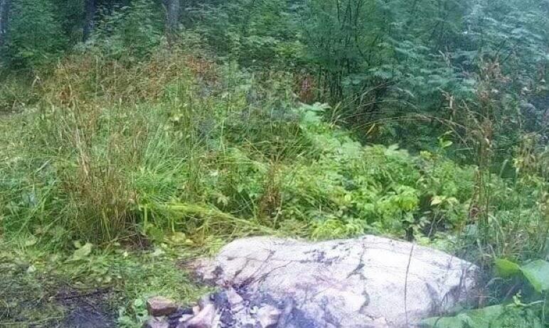 В Челябинской области на Таганае неизвестные бросили посреди леса дымящийся костер. Огонь потушил