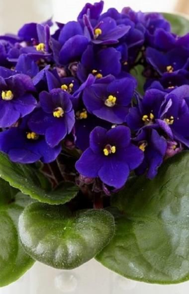 Комнатные цветы могут не только поднять настроение, но и повлиять на интимную жизнь.  Ка