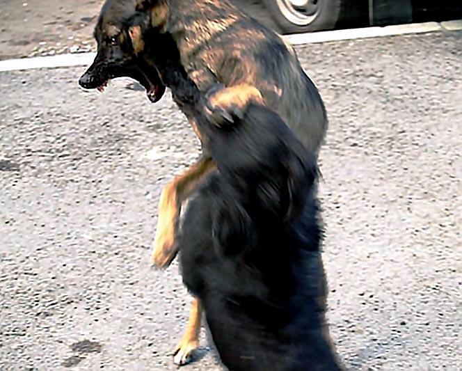 В Златоусте (Челябинская область) трупы бездомных собак разбросали по лесу. Службе по их отлову г