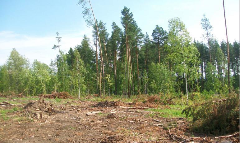 Ни для кого не секрет, какова в России ситуация с лесами. Коммерческая продажа леса процветает, л
