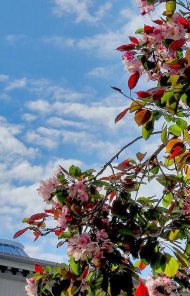 В пятницу, 5 июня, в Челябинской области ожидается переменная облачность, без существенных осадко