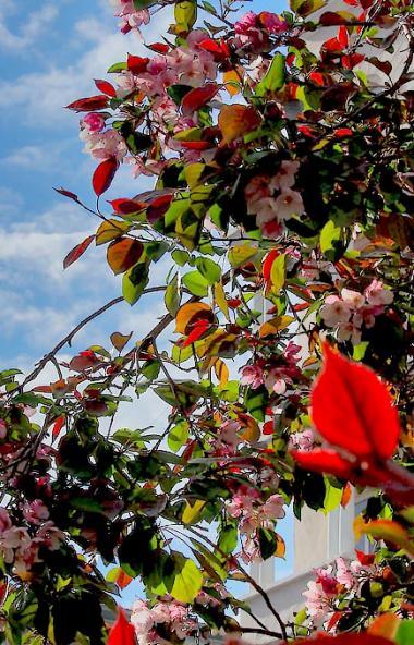 В понедельник, 15 июня, в Челябинской области ожидается теплая погода, преимущественно без осадко