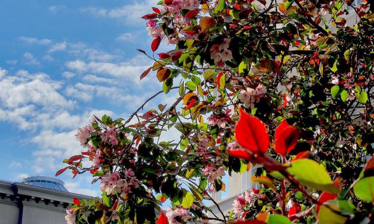 В предстоящие выходные, 22 и 23 мая, в Челябинской области ожидается жаркая и солнечная погода. В