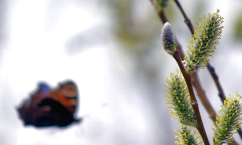 В праздничные дни, первого и второго мая, в Челябинской области ожидается облачная погода с прояс