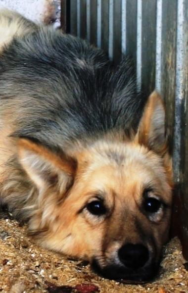 В Челябинске идет проверка аукционной документации по безнадзорным животным. Завтра, 25-го марта,