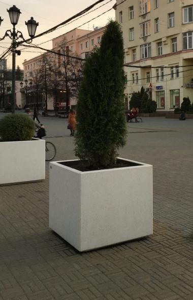 На площади Революции Челябинска появятся деревья в уличных вазонах. Высадить крупномеры в больших