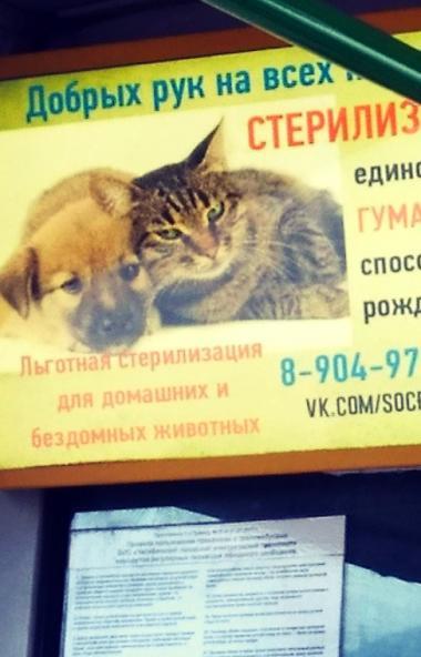 В Челябинске стартовал очередной социальный проект по пропаганде стерилизации домашних и бездомны