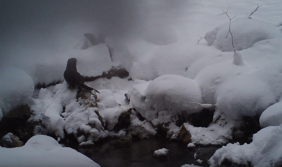 В национальном парке «Зюраткуль» (Челябинскаяобласть) в объектив фотоловушки попалось целое семе