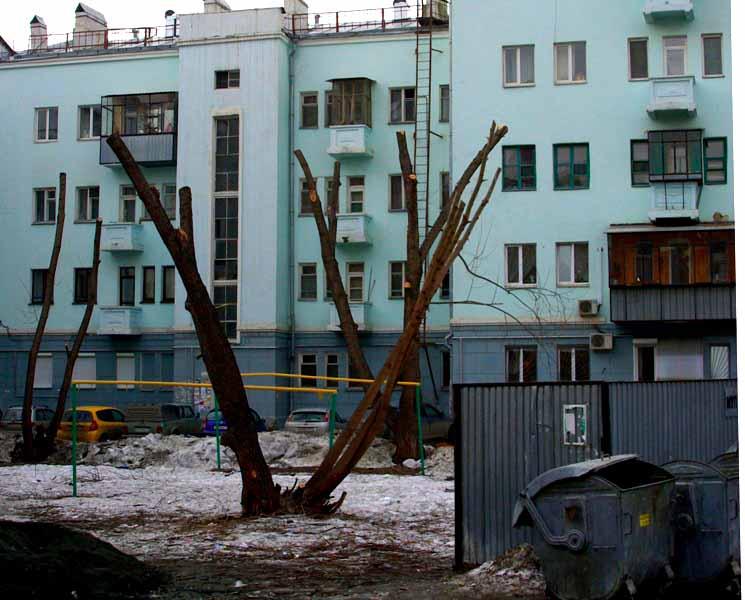 Сегодня, 18 апреля, на аппаратном совещании в мэрии Сергей Давыдов поднял тему санитарной обрезки