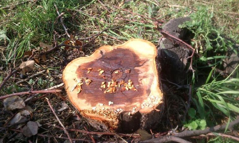 Прокуратура начала проверку по обращению общественников о незаконном переводе лесного фонда на се