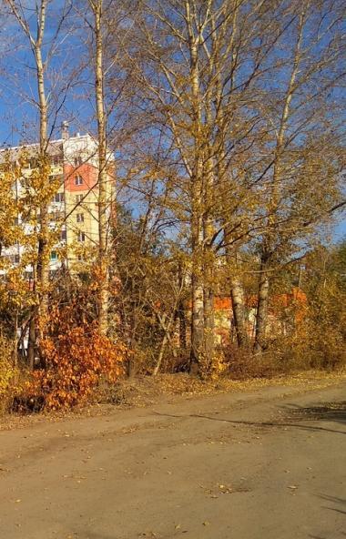 Жители челябинского поселка Чурилово продлили жизнь тополям и кленам на земельном участке неподал