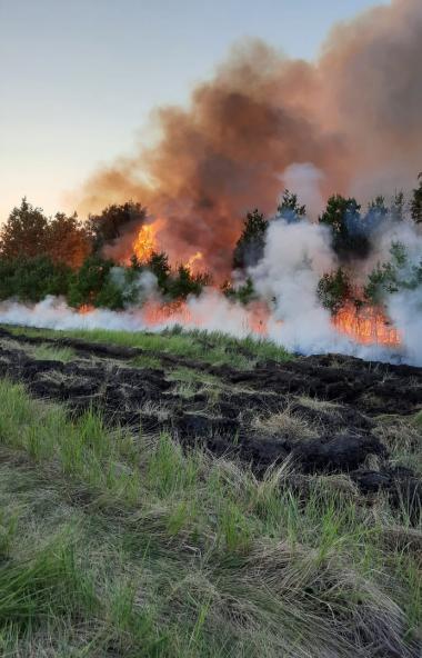 В Челябинске на территории городского бора произошло возгорание сухой травы. Площадь составила по