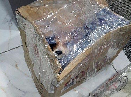 В Магнитогорске (Челябинская область) неизвестные выбросили на мороз девять щенков. Чтобы малыши