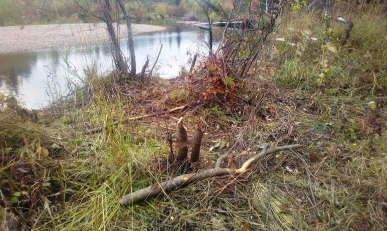 В национальном парке «Зигальга» (Катав-Ивановский район, Челябинская область) вовсю кипит работа