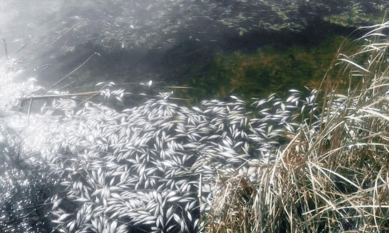 В Челябинской области массово умирает рыба. Вчера, 12-го апреля, о ее заморе на разрезе Светлый в