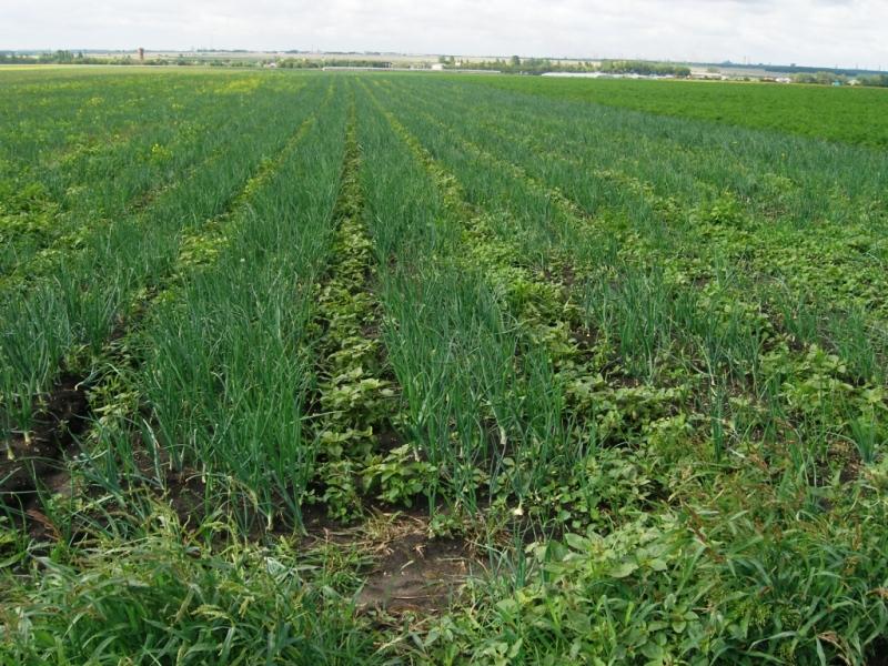 Нарушения были выявлены надзорным ведомством в крестьянско-фермерском хозяйстве «Калайда» в селе