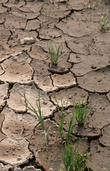 Засуха вносит коррективы в работу южноуральских аграриев. Несмотря на это, они ведут загото