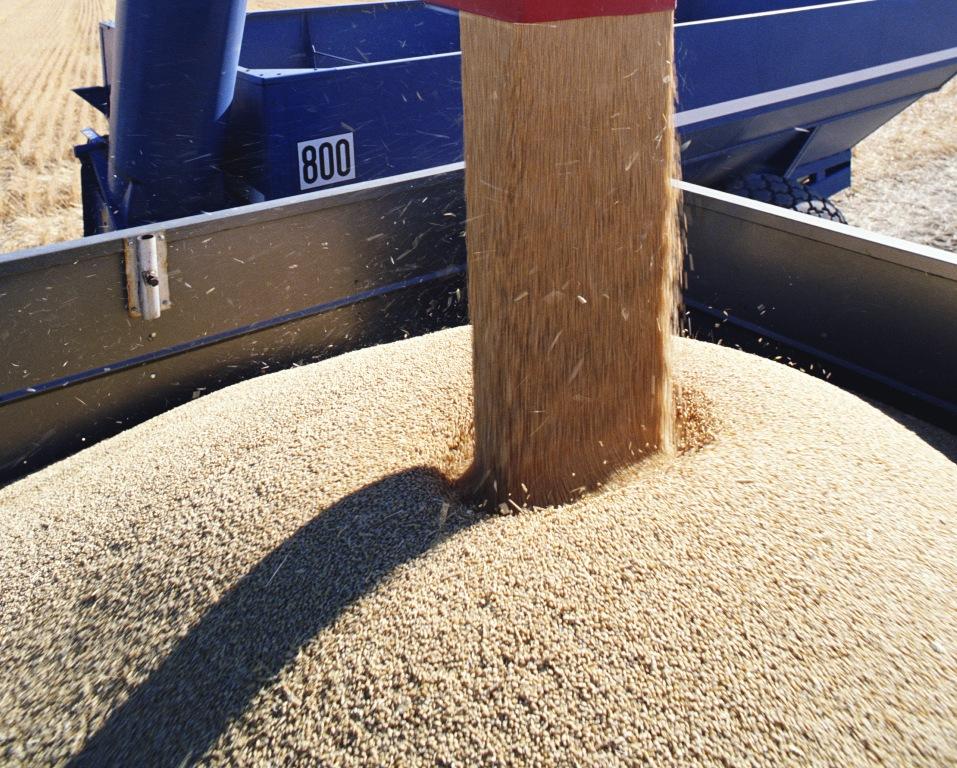 На сегодняшний день закуплено 118 тысяч тонн зерна. «Средняя цена на мягкую пшеницу – 8,5 тысячи