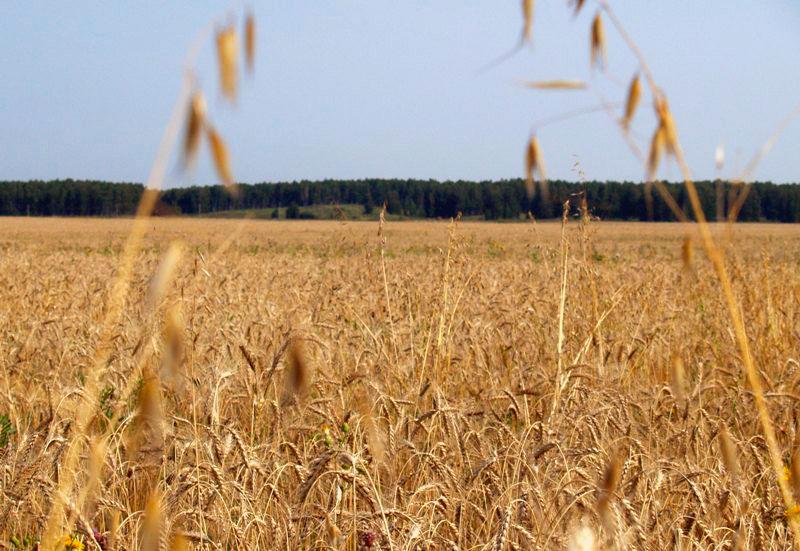 В случае если нарушения не будут устранены, управление Россельхознадзора по Челябинской области о
