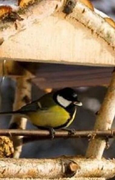 Челябинский зоопарк приглашает горожан присоединиться к организации «Птичьего города» на территор