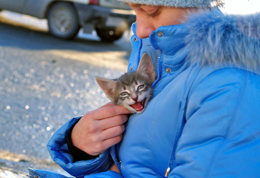 Россия поворачивается лицом к животным. Решение, благодаря которому - хочется верить - всем четве