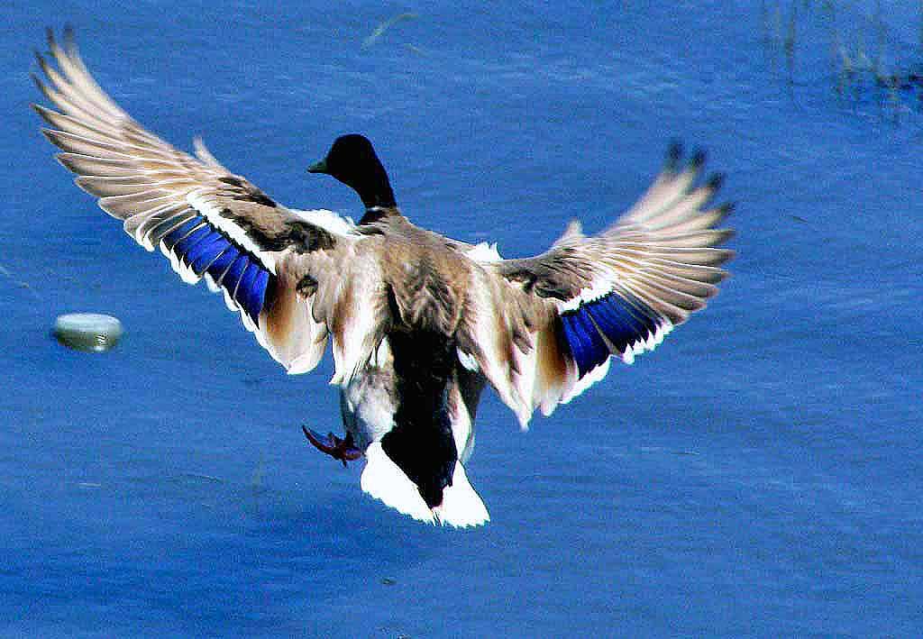 В предстоящую субботу, 25 августа, в Челябинской области на утренней зорьке открывается сезон охо