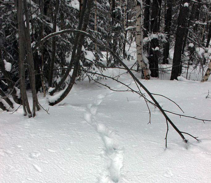 В национальном парке стартовал ежегодный зимний маршрутный учёт. Из-за погоды он начался почти на