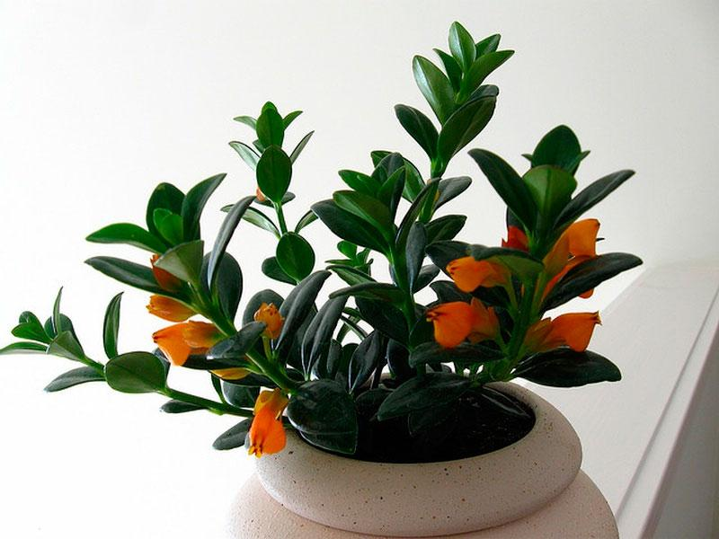 Тот факт, что в цветах, выращенных в Нидерландах, поселились именно эти крошечные насекомые, подт
