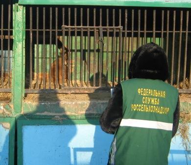 Передвижной зоопарк расположился возле ДК «Станкомаш». 29 февраля по требованию прокуратуры Ленин