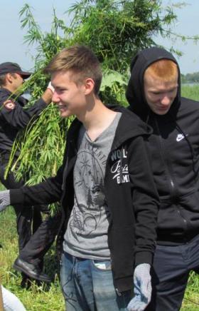 Сотрудники полиции Копейска за одним из поселков города нашли плантацию дикорастущей конопли. К е