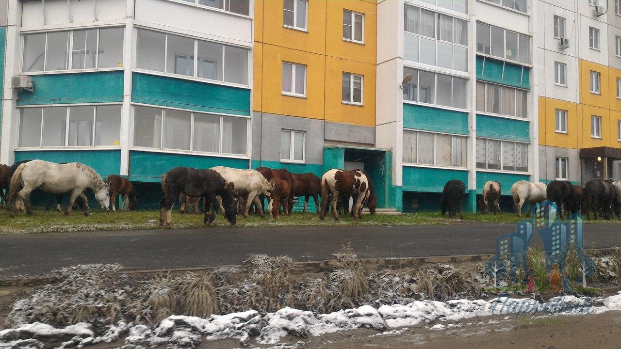 Необычный инцидент произошел у дома по улице Скульптора Головницкого, 32. «Обычное дел